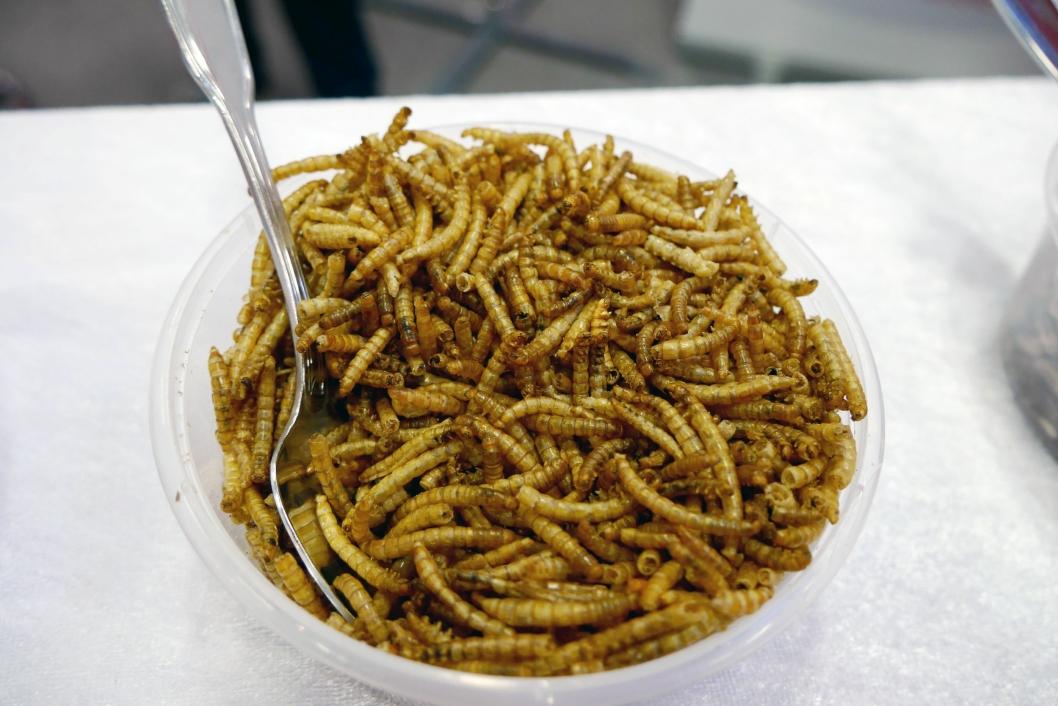 MELBILLELARVER: Sprø som potetgull og perfekt til knekkebrød eller som ingrediens i tacokrydder.