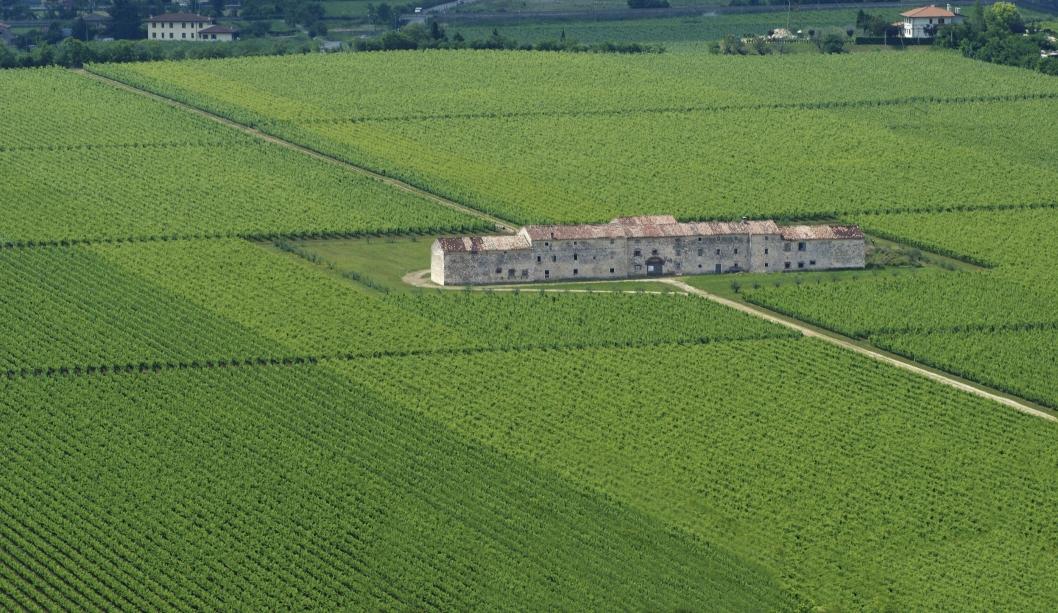 EDELT OMRÅDE: På Tommasis vingård dyrkes noen av norske vindrikkeres favorittdråper.