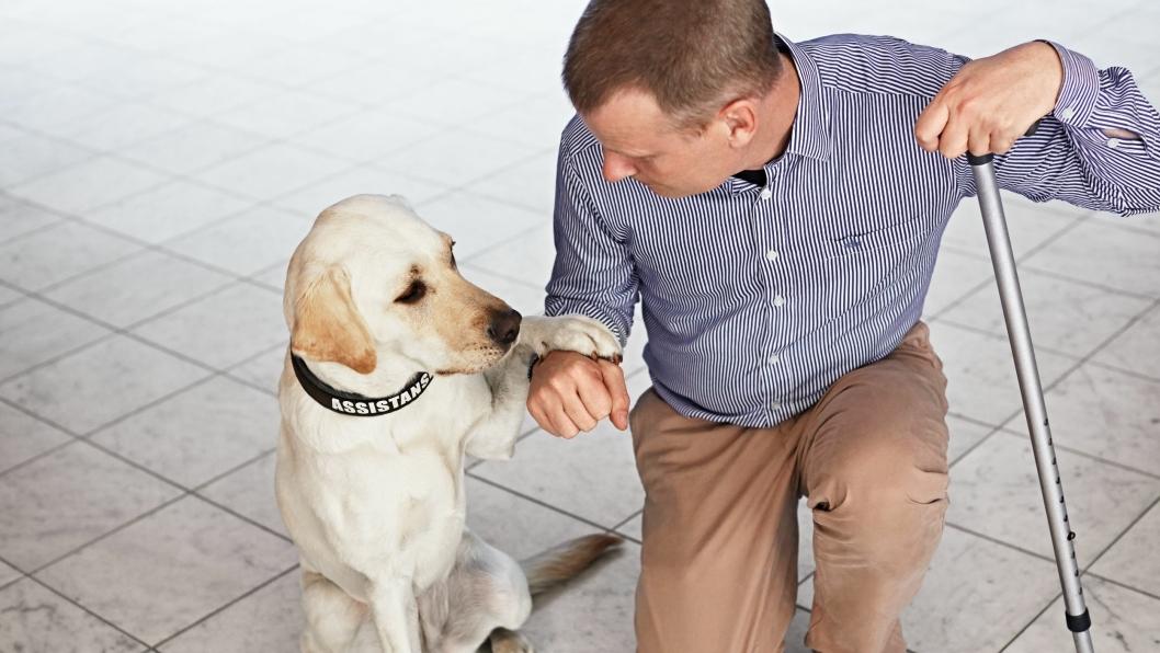 VIKTIG: Scandic Magnus Berglund og hans servicehund Dixi er viktige bidragsytere i Scandics kamp for tilgjengelighet og mangfold.